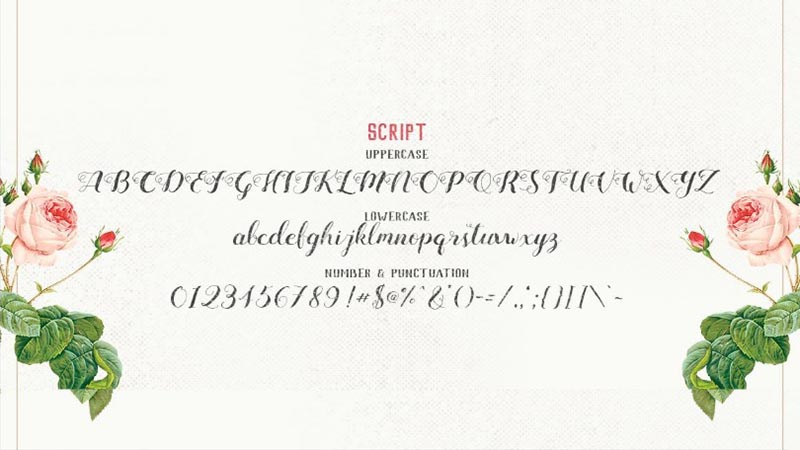 Mightype Font Free Download