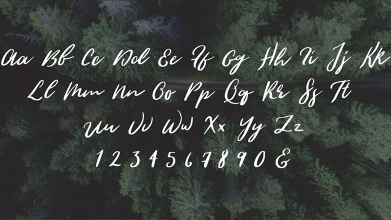 Wild Youth Font Family Download